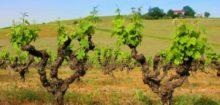 Vin Pessac Leognan: du vin français comme je l'aime.